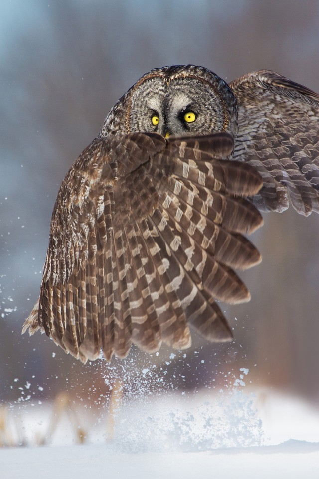owls87