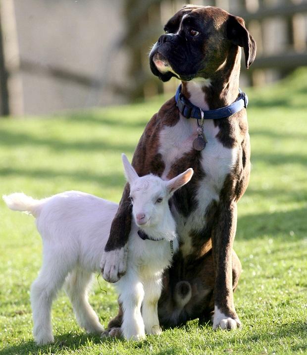 11-Обнимающиеся животные