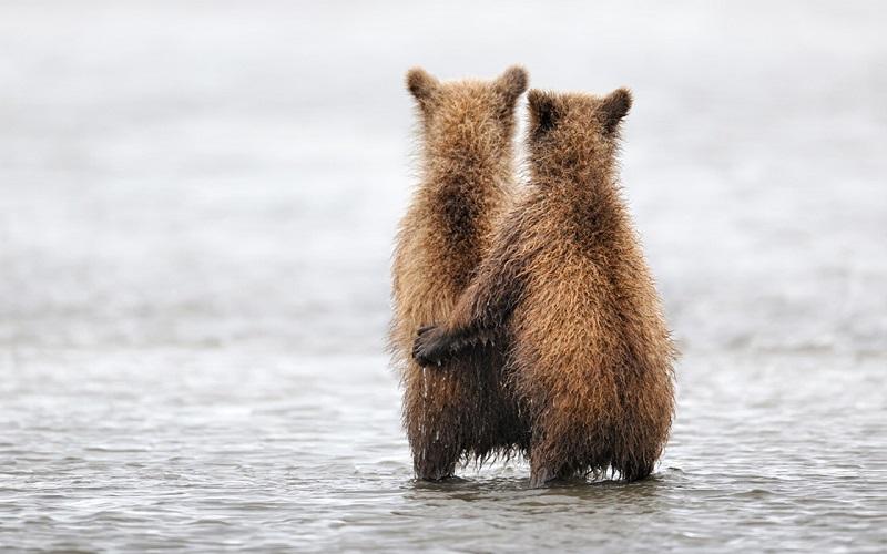 26-Обнимающиеся животные - медвежата