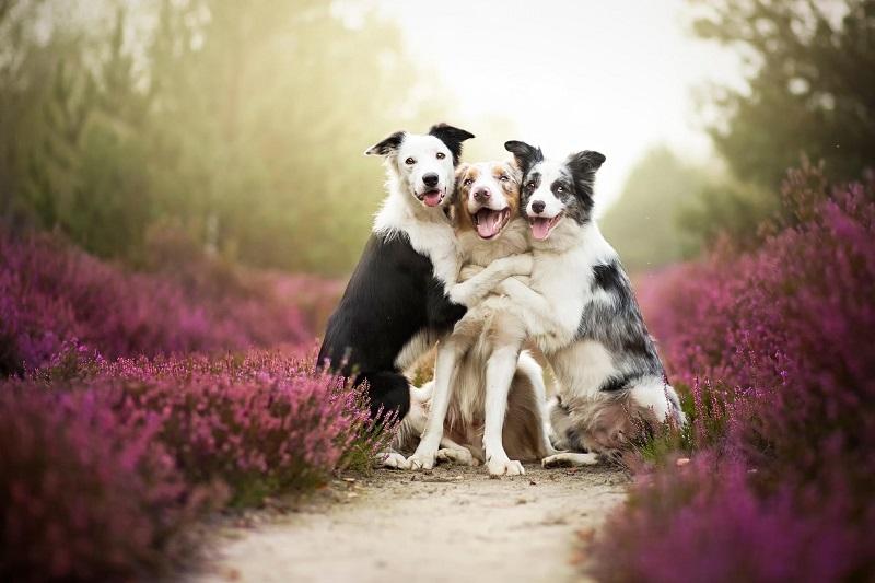 8-Собачьи обнимашки