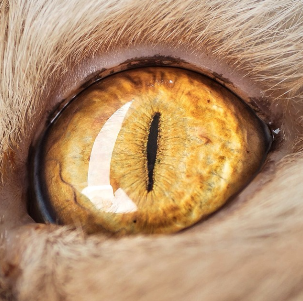 Cat-Eyes1__605