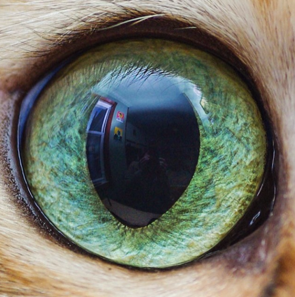 Cat-Eyes2__605