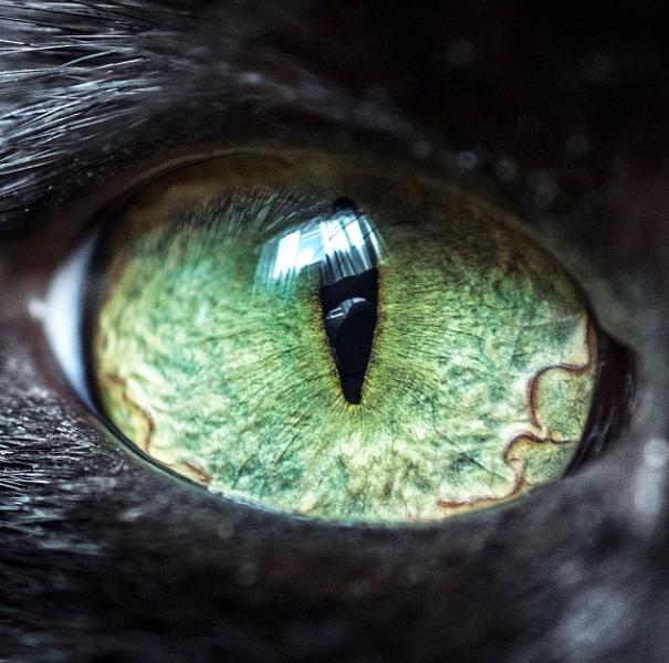 Cat-Eyes3__605