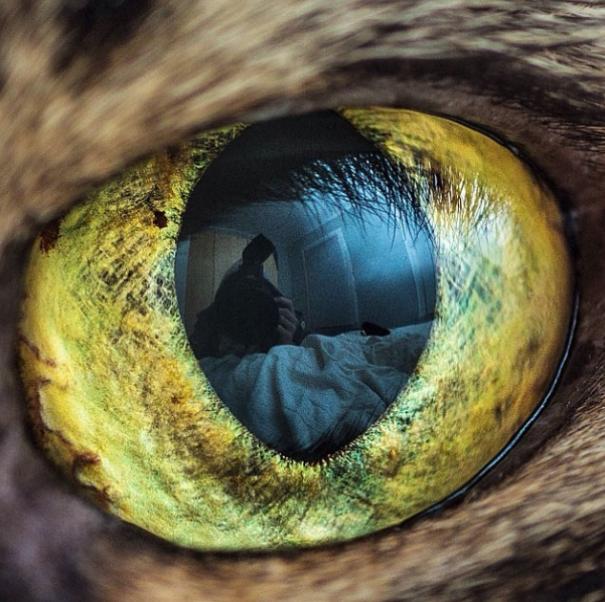 Cat-Eyes5__605