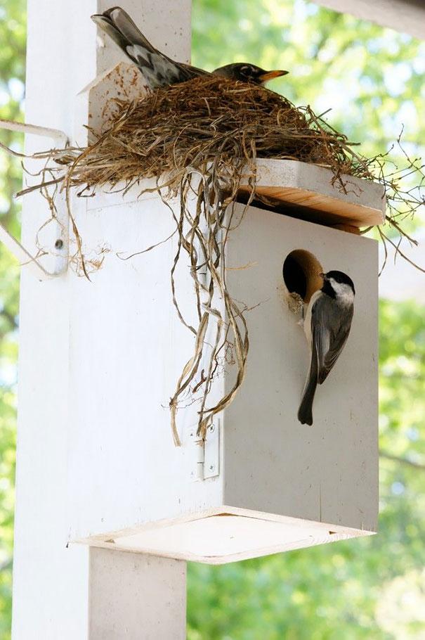 bird-nests-unusual-places-15__605