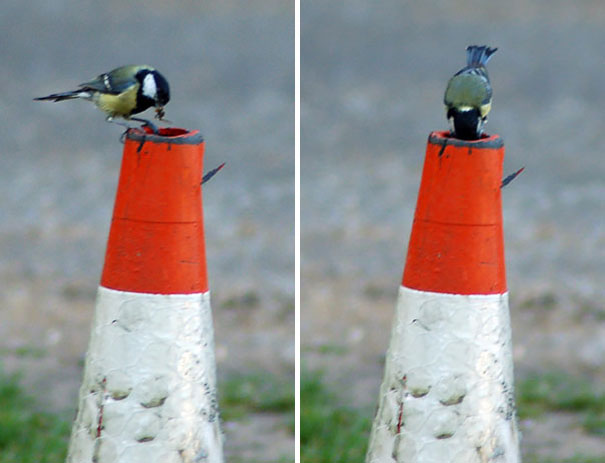bird-nests-unusual-places-20__605