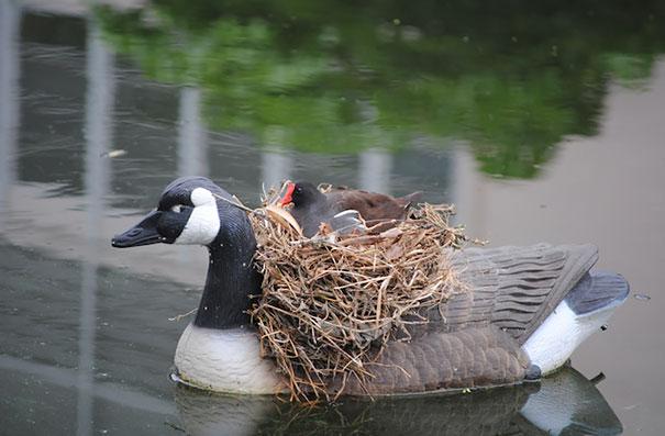 bird-nests-unusual-places-25__605