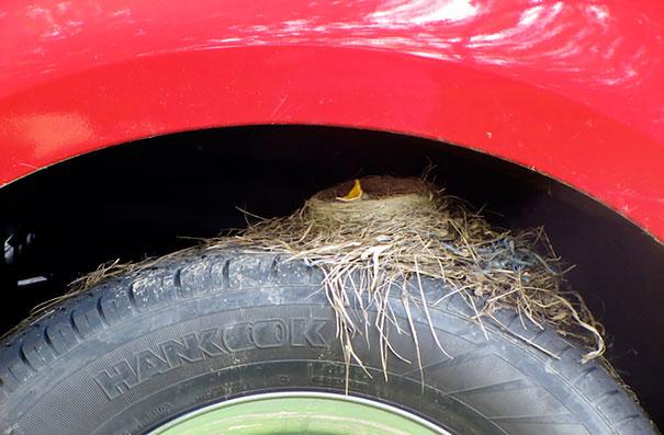bird-nests-unusual-places-29__605