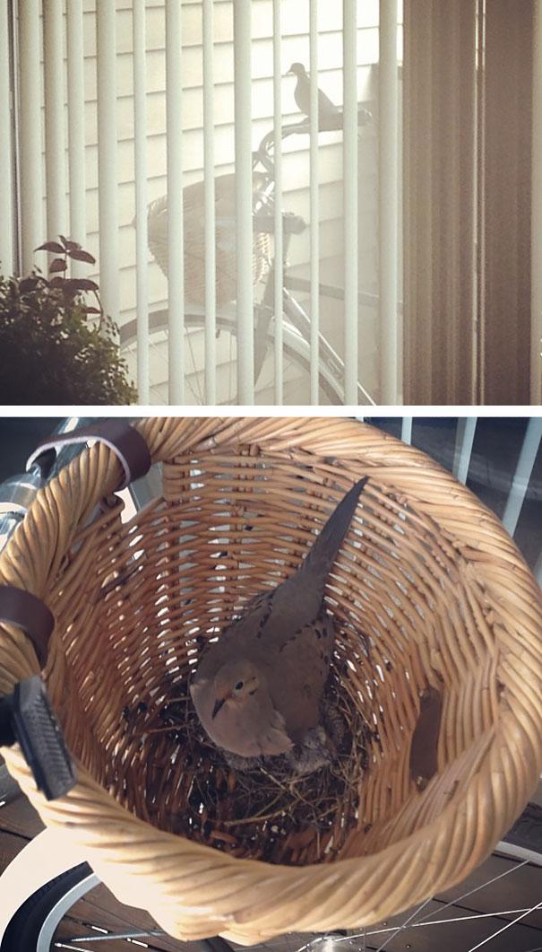 bird-nests-unusual-places-3__605