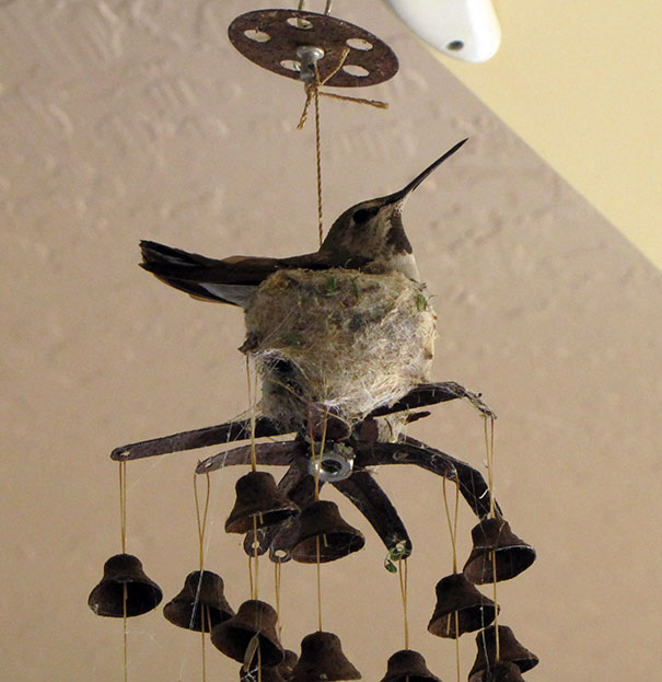 bird-nests-unusual-places-4__605