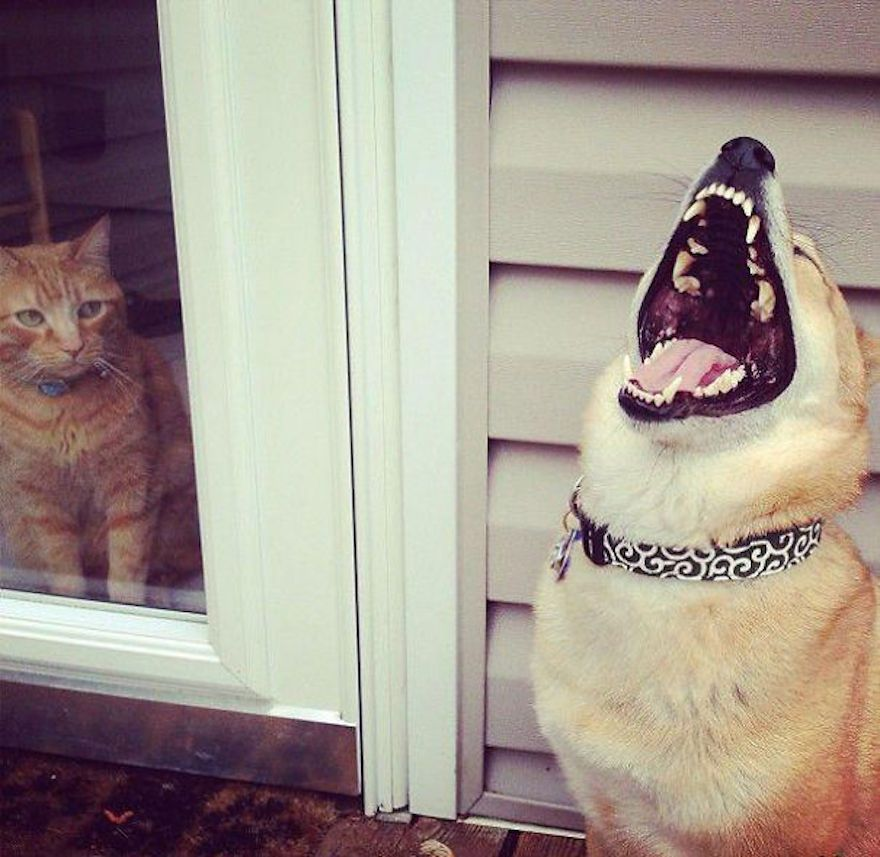 funny-evil-dog-1__605