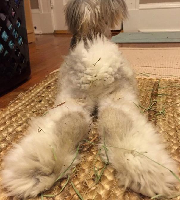 haircut-rabbit-angora-wally-17