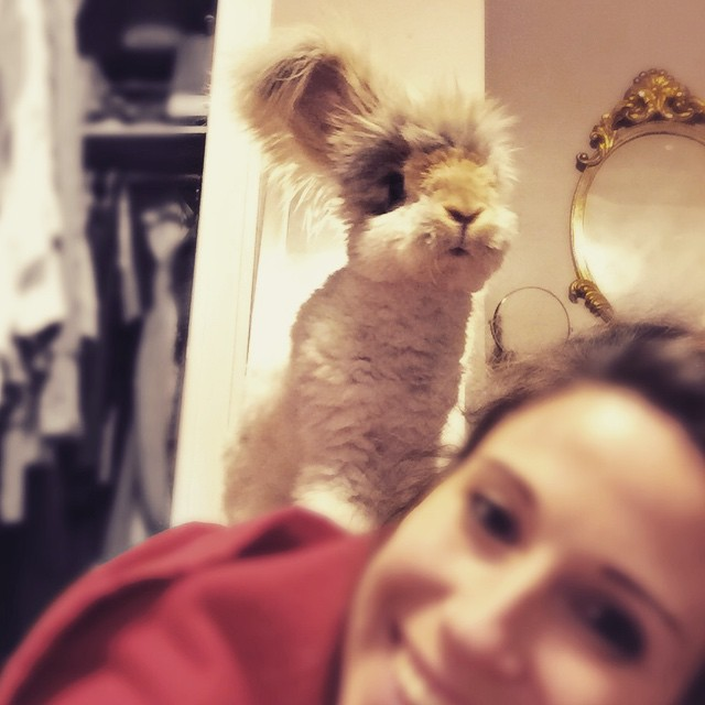 haircut-rabbit-angora-wally-28