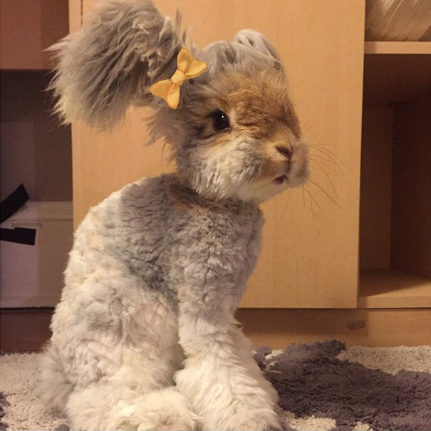 haircut-rabbit-angora-wally-5