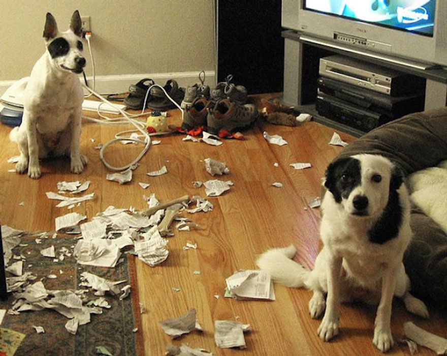 naughty-dogs-caught-in-the-act__605
