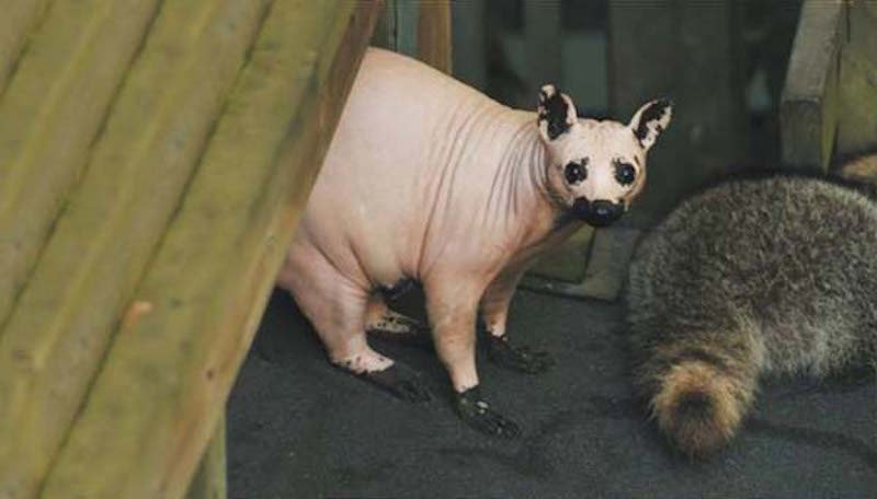 these-17-bald-animals-will-blow-your-mind-10