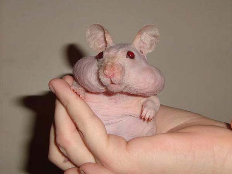 these-17-bald-animals-will-blow-your-mind-16