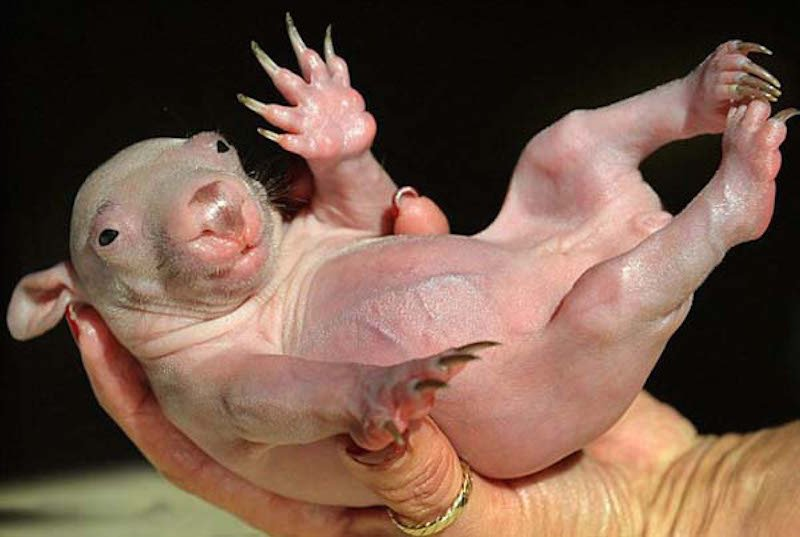 these-17-bald-animals-will-blow-your-mind-6