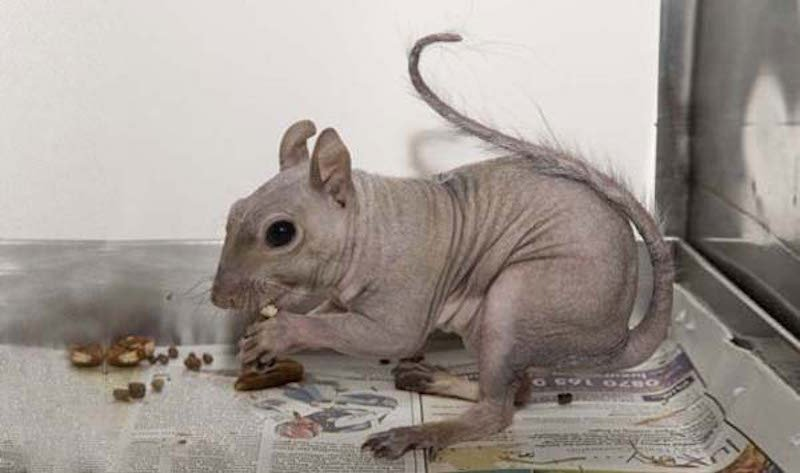 these-17-bald-animals-will-blow-your-mind-9
