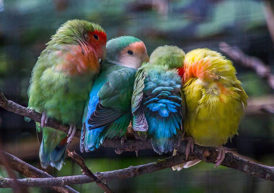 CuddlingBirds10