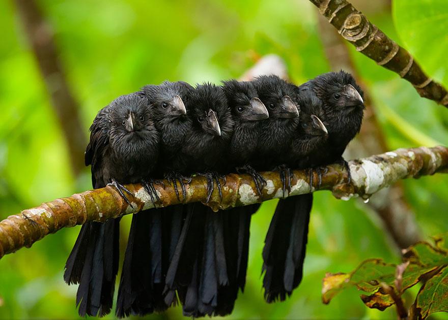 CuddlingBirds11