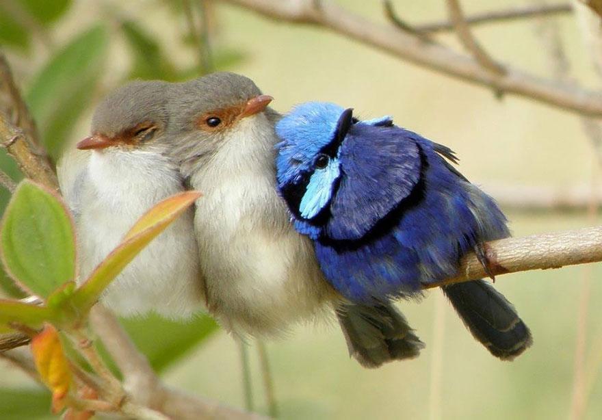 CuddlingBirds14
