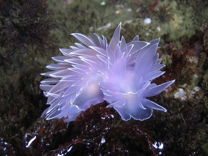 beautiful-unusual-sea-slugs-13__880