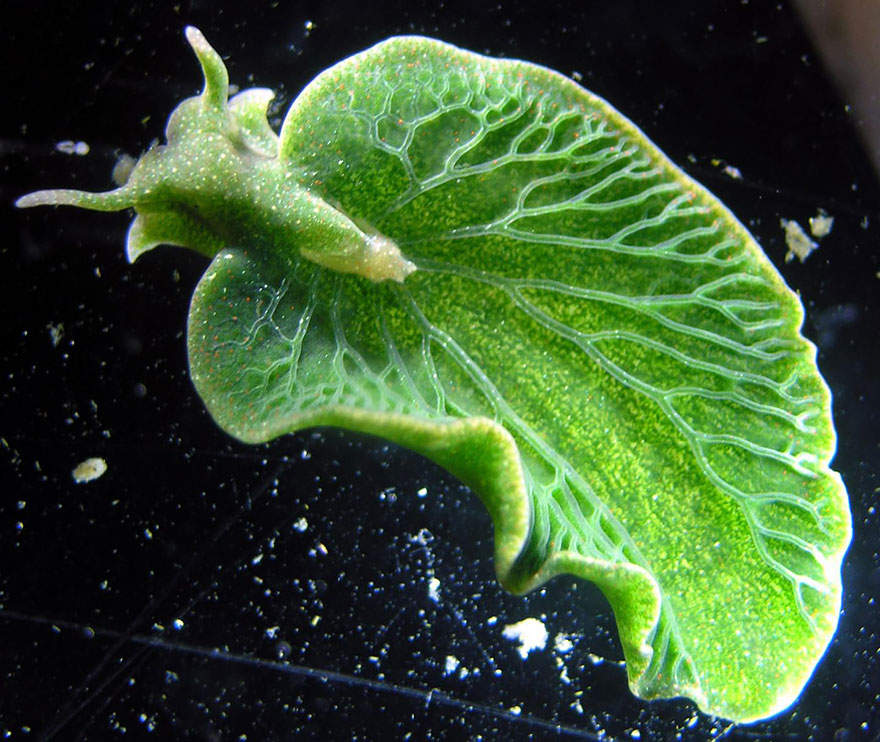 beautiful-unusual-sea-slugs-9__880