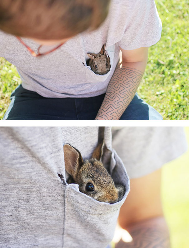 cute-bunnies-106__605