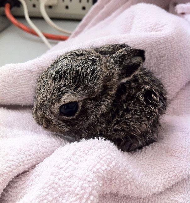 cute-bunnies-112__605