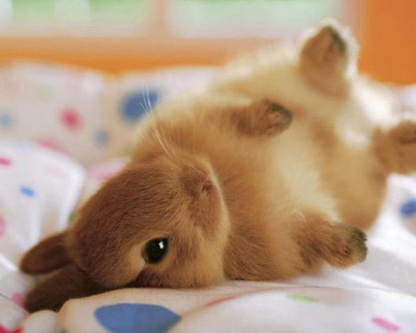 cute-bunnies-25__605