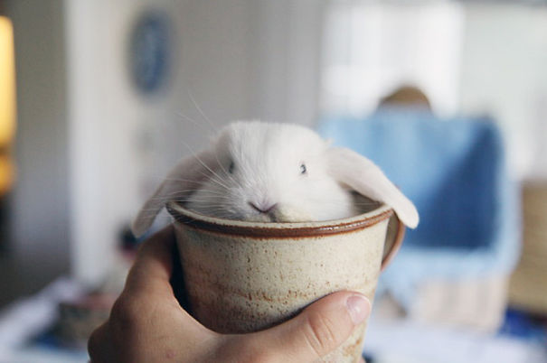 cute-bunnies-26__605