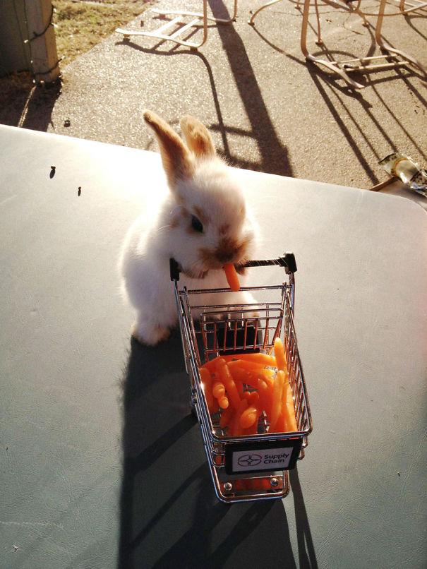 cute-bunnies-29__605