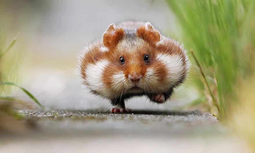 cute-hamsters-1__880