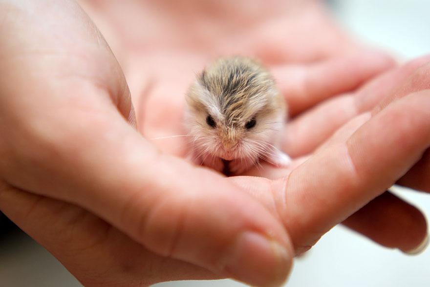 cute-hamsters-6__880