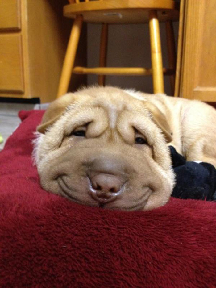 post-the-happiest-dogs-who-show-the-best-smiles-18__700 (1)
