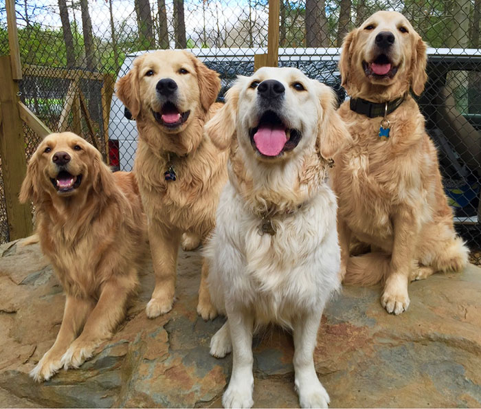 post-the-happiest-dogs-who-show-the-best-smiles-23__700