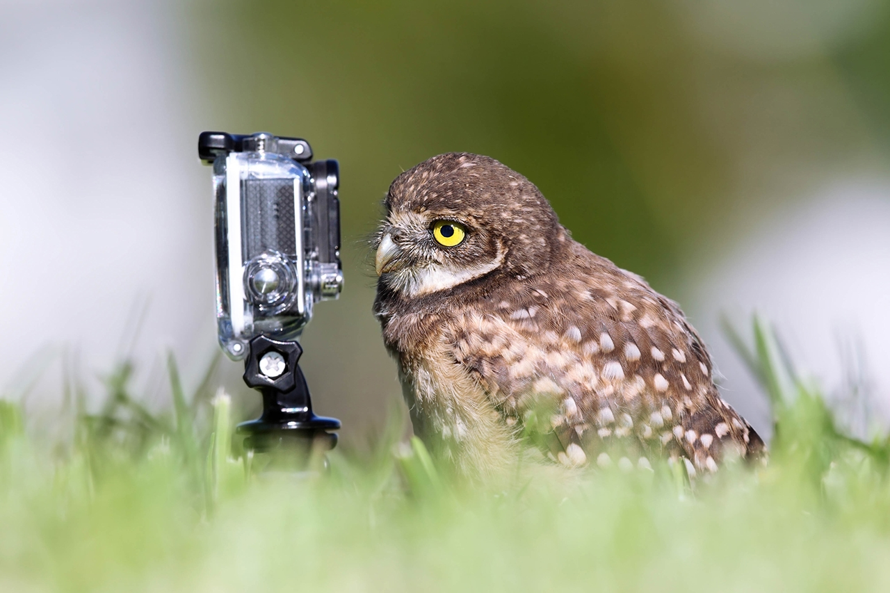 Comedy-Wildlife-Photography-Awards-2015_06