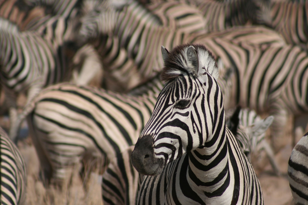 The-Zoological-Society-of-London-2015-11