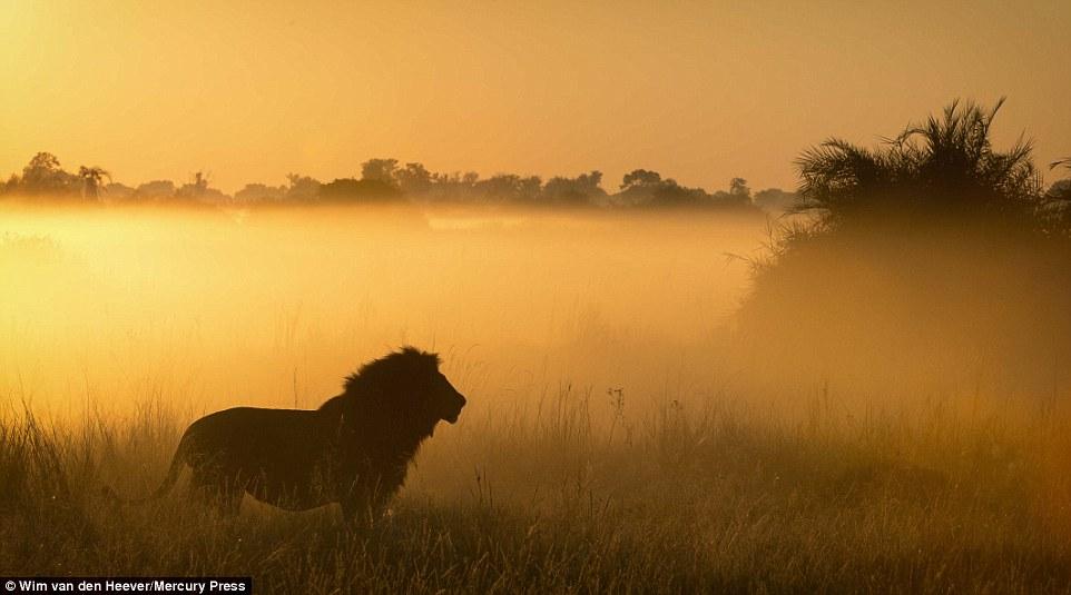 animal-kingdom_20