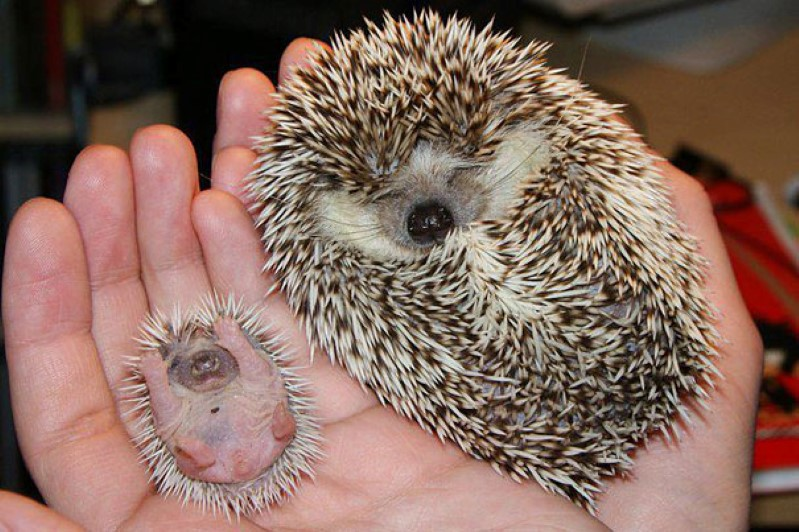 animals-with-miniature-versions-of-themselves-4-Custom