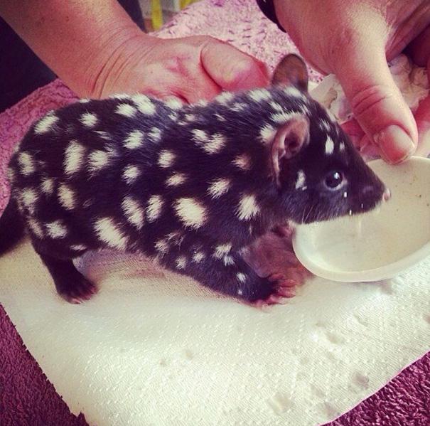 cutest-baby-animals-68__605
