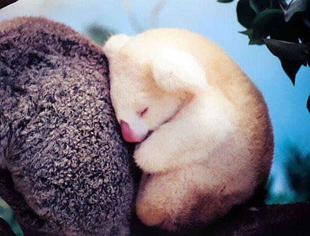 cutest-baby-animals-6__605
