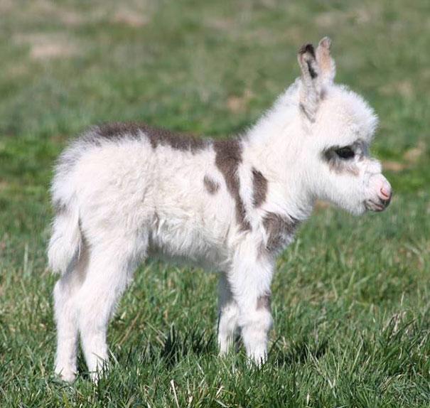 cutest-baby-animals-9__605