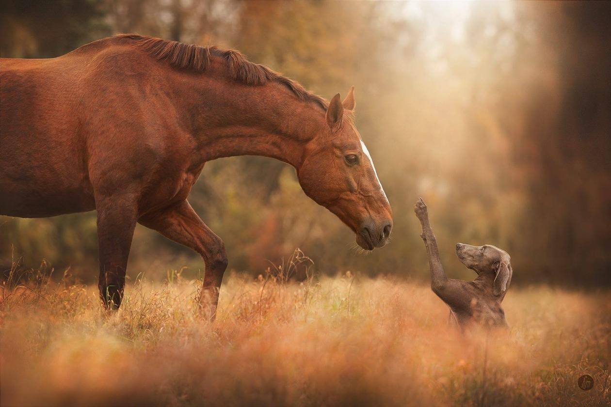 horse-01 (1)