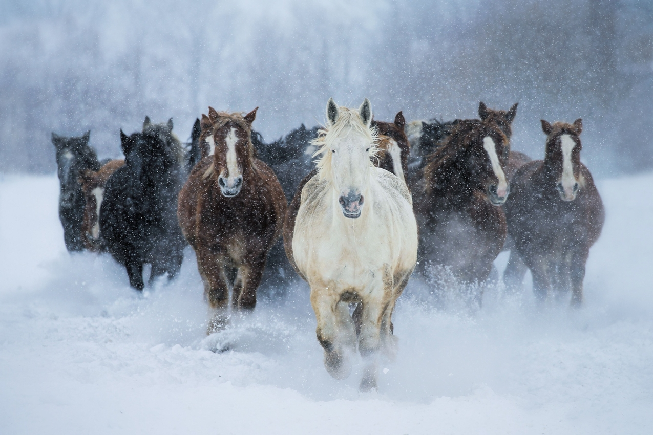 horse-15