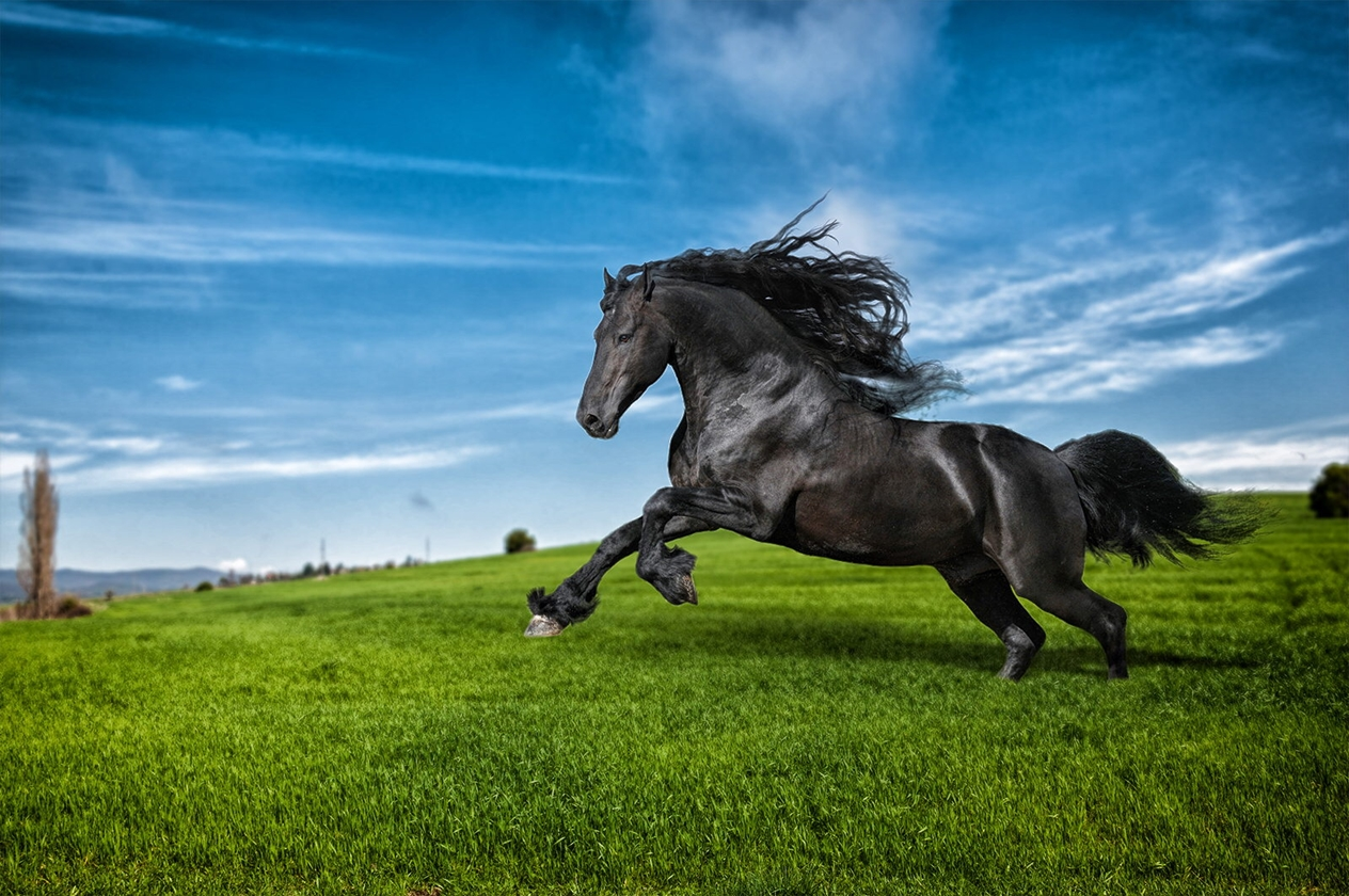 horse-16