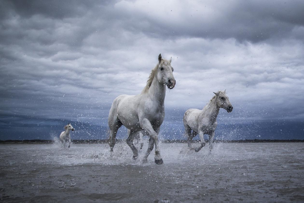 horse-18
