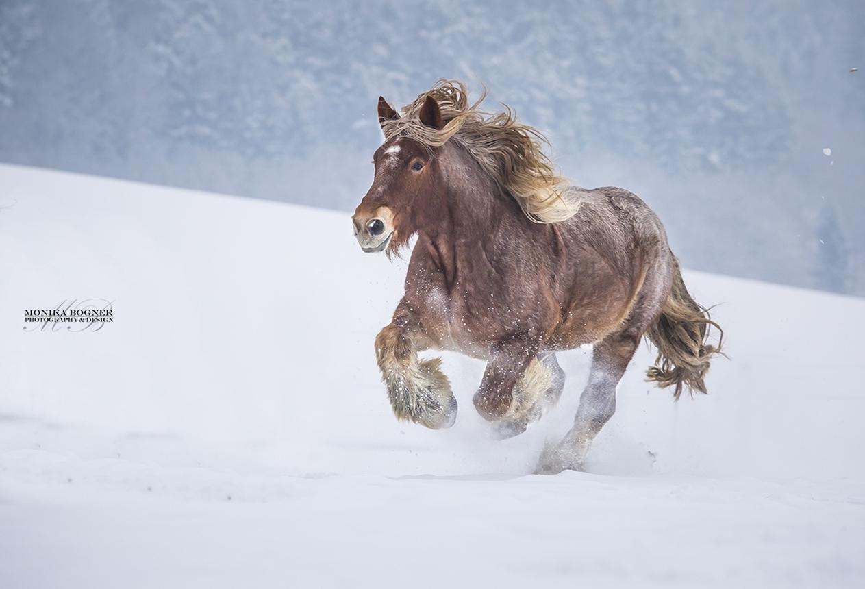 horse-20