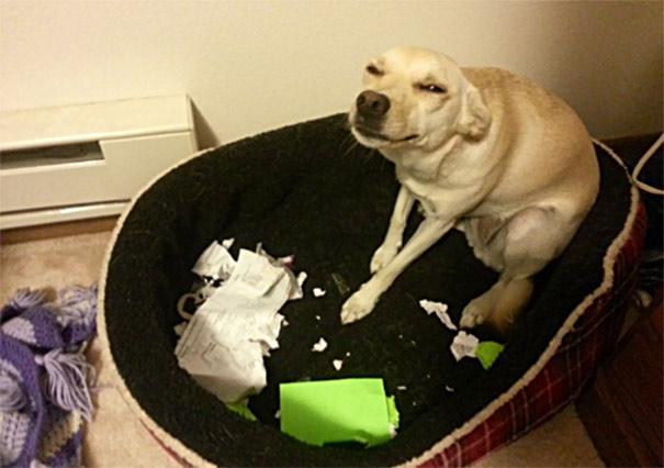 naughty-animals-destroying-stuff-2__605